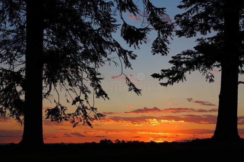 Сосна silhouettes заход солнца рамки стоковая фотография rf