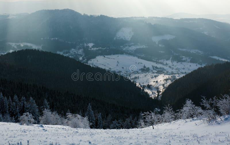 Сосновый лес горы ландшафта зимы в лучах солнца стоковая фотография rf