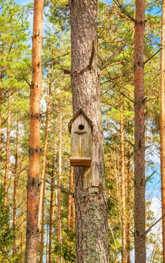 Сосновый лес весны стоковые фотографии rf