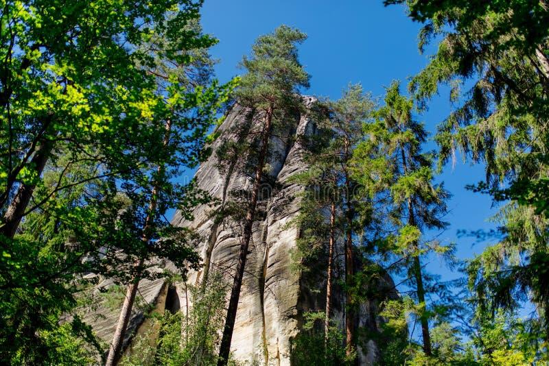 Сосновый лес Чехии стоковые изображения rf