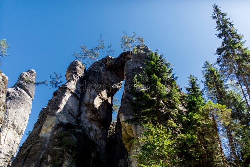 Сосновый лес Чехии стоковое фото