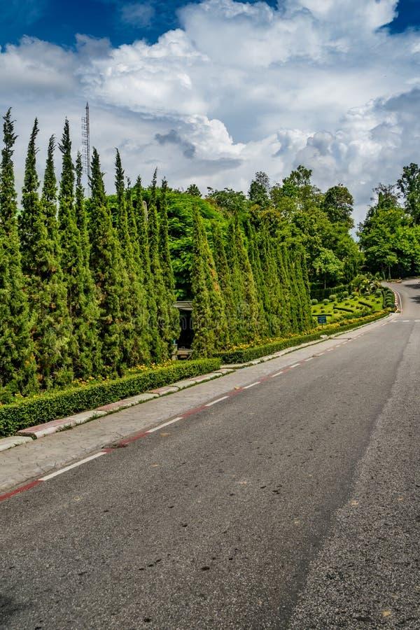 Сосны в парке стоковое изображение