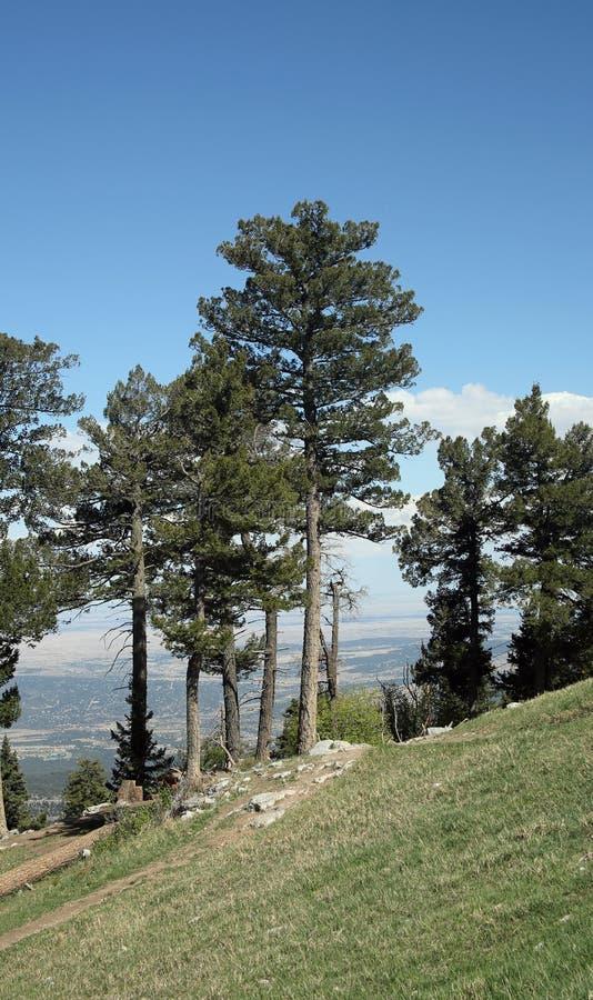 Сосны на пике гор Сандии к востоку от Альбукерке стоковые изображения rf