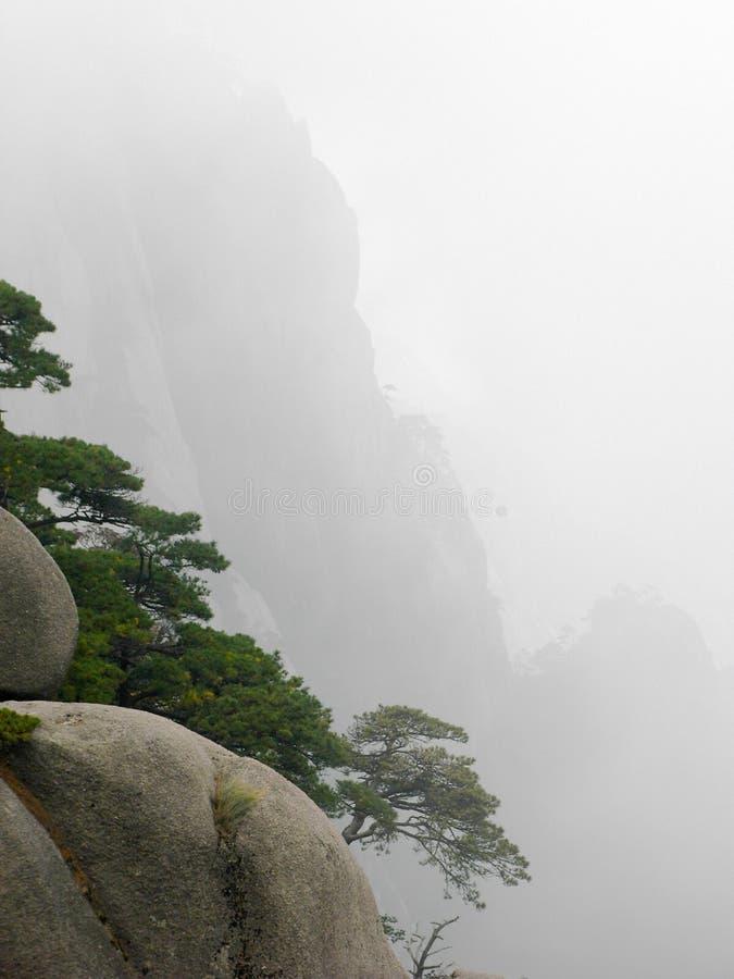 Сосны на скале стоковая фотография rf