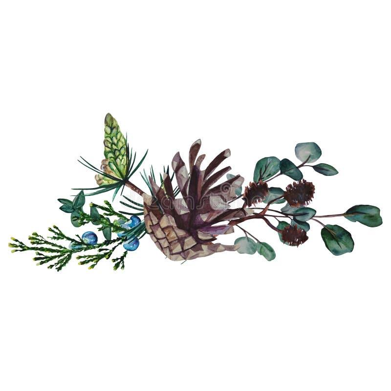 Состав акварели ветвей и конусов стоковая фотография