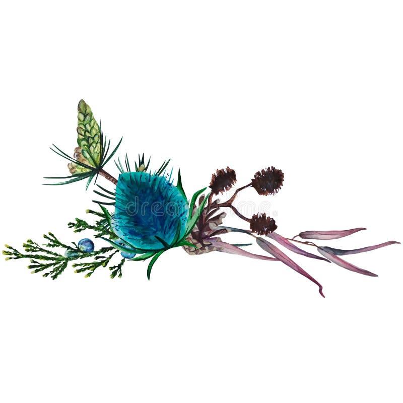 Состав акварели ветвей, конусов и терния стоковое фото
