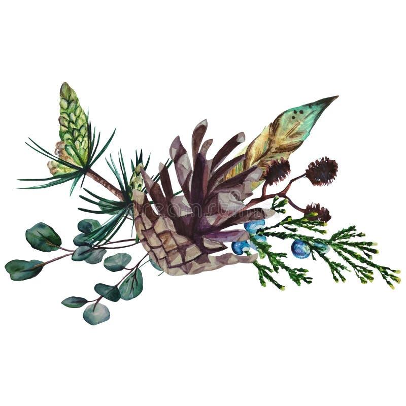 Состав акварели состоя из сосны, ветвей эвкалипта и ольшаника, пера и конусов сосны иллюстрация штока