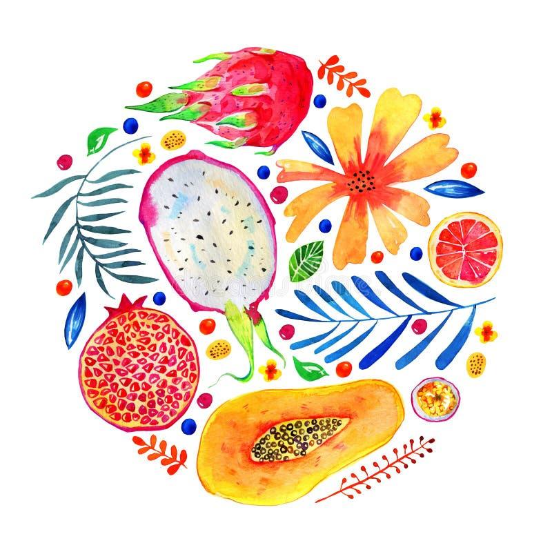 Состав в круге с экзотическими плодами и декоративными цветками Цитрус, pitahaya, гранатовое дерево, папапайя бесплатная иллюстрация