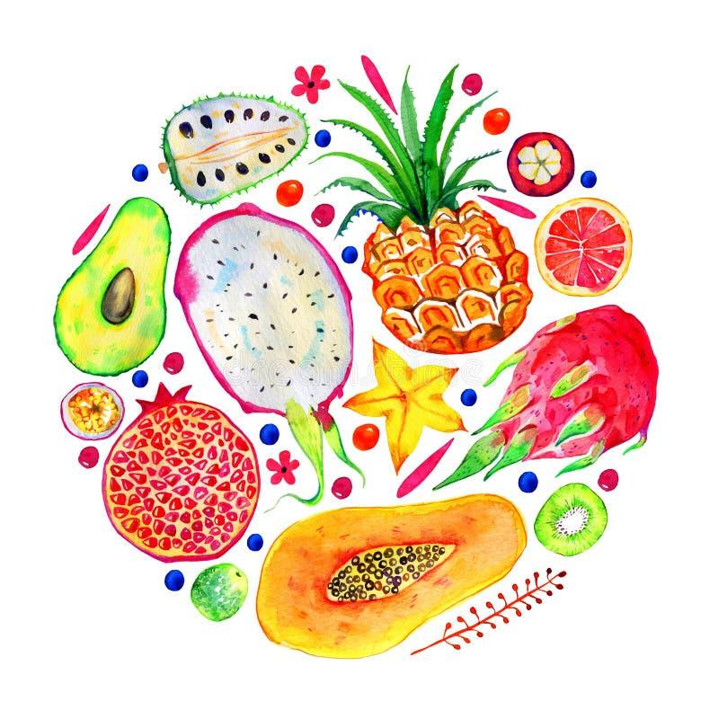 Состав в круге с экзотическими плодами Цитрус, авокадо, pitahaya, карамбола, annona, ананас, гранатовое дерево, папапайя вычерчен бесплатная иллюстрация