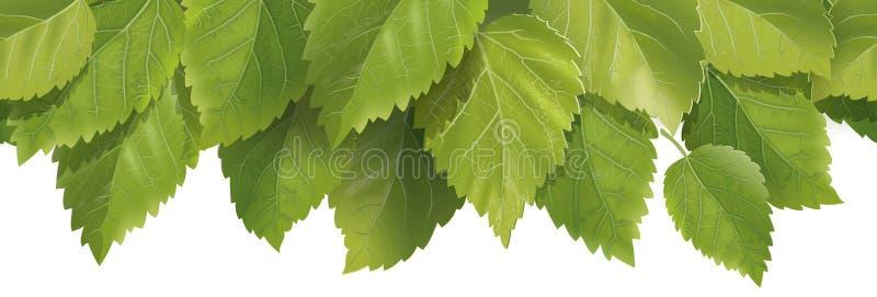 Состав листьев иллюстрация вектора