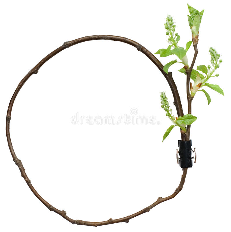 состав круга ветви декоративный стоковое фото