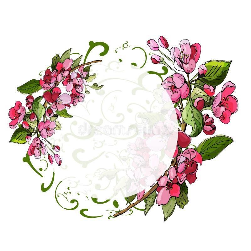 Состав круга цвести розовой ветви яблони и цветков Эскиз руки вычерченный покрашенный цветков яблони иллюстрация штока