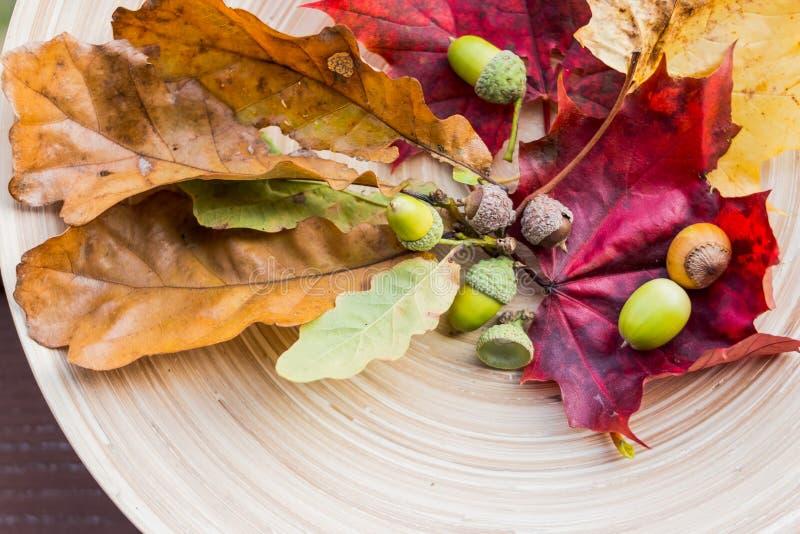 Состав осени на деревянной предпосылке Листья осени, жолуди, конусы, гайки Плоское положение с красочными листьями Взгляд от Burj стоковое фото