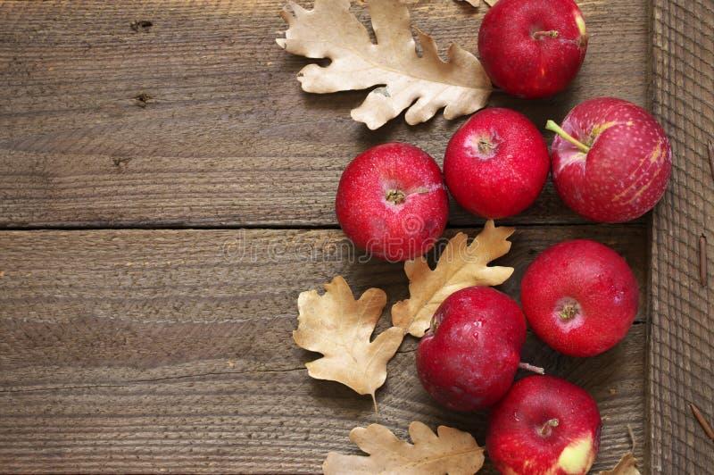 Состав осени с красными яблоками стоковое изображение