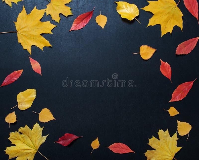 Состав осени с орнаментом листьев цвета на задней доске шифера с космосом экземпляра яркий текст осени сезона листвы клена ретро стоковое фото
