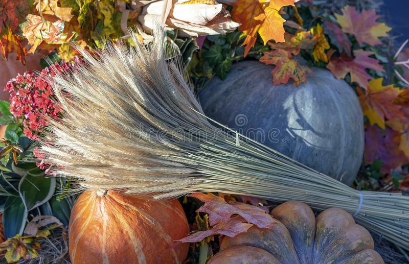 Состав осени с тыквами, кленовыми листами и ушами пшеницы стоковое фото