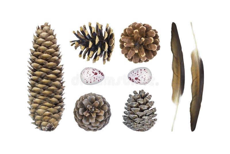 Состав осени установленный естественных материалов, различных конусов, пер, яйца триперсток Изолят на белой предпосылке, взгляде  стоковые фото