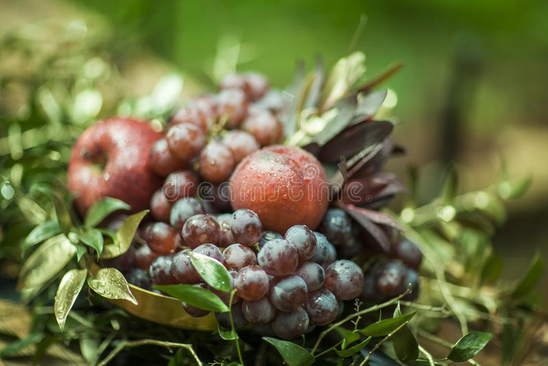 Состав плодоовощей и листьев на запачканной предпосылке стоковое фото rf