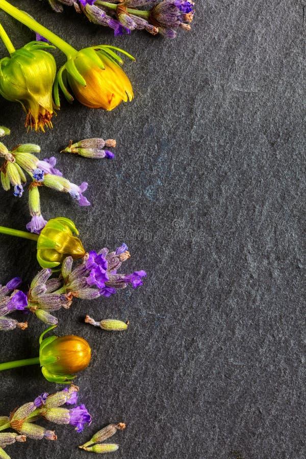 Состав полевых цветков Рамка сделанная из различных красочных цветков на белой темной предпосылке Плоское положение, взгляд сверх стоковые фото