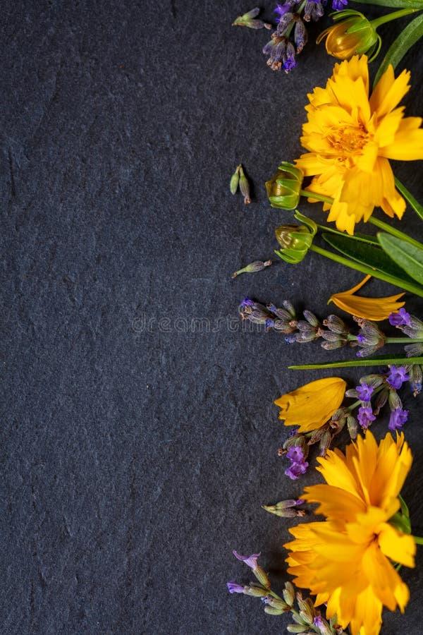 Состав полевых цветков Рамка сделанная из различных красочных цветков на белой темной предпосылке Плоское положение, взгляд сверх стоковые изображения