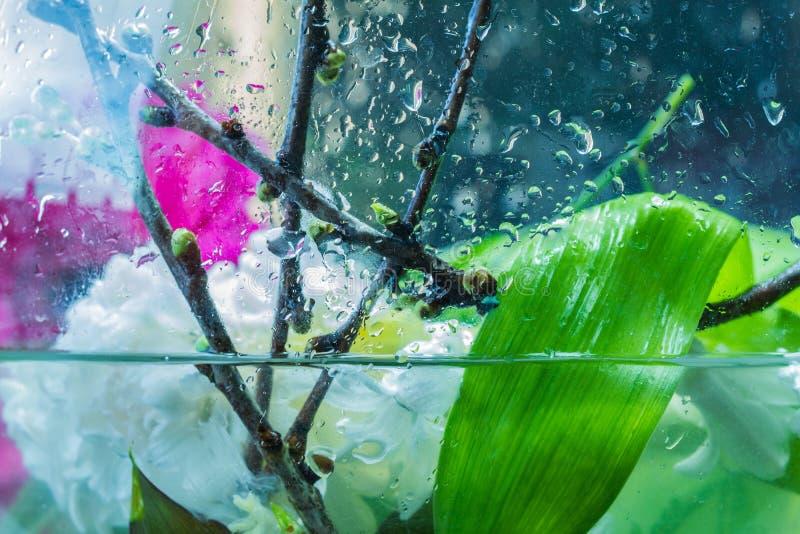 Состав свежих цветков экстренныйого выпуска некоторый в воде стоковая фотография rf