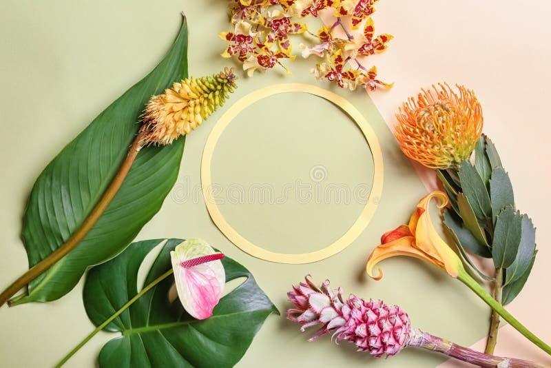 Состав с зелеными тропическими листьями, цветками и рамкой на предпосылке цвета стоковое изображение rf