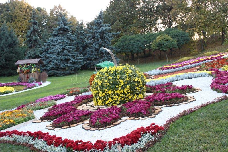 Состав хризантемы стоковая фотография