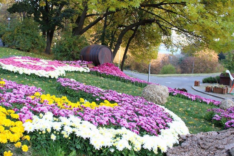Состав хризантемы стоковые фотографии rf