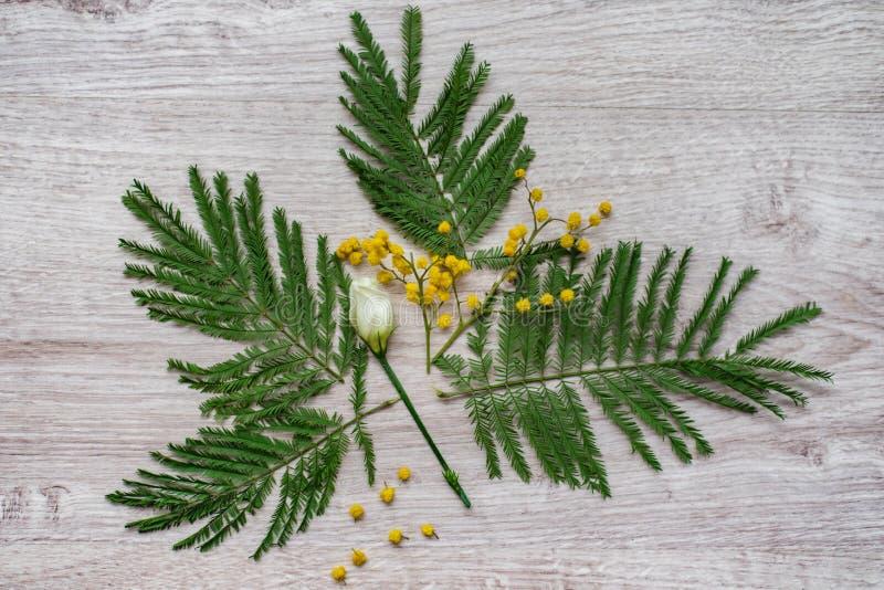 Состав цветка дизайна натюрморта флористический декоративный сделанный от мимоз на деревянной предпосылке стоковые изображения