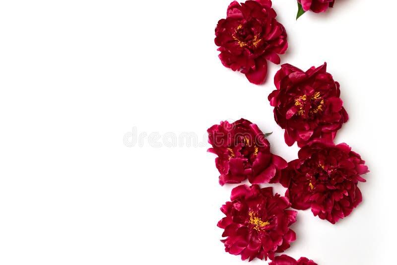 Состав цветков весны стоковое изображение