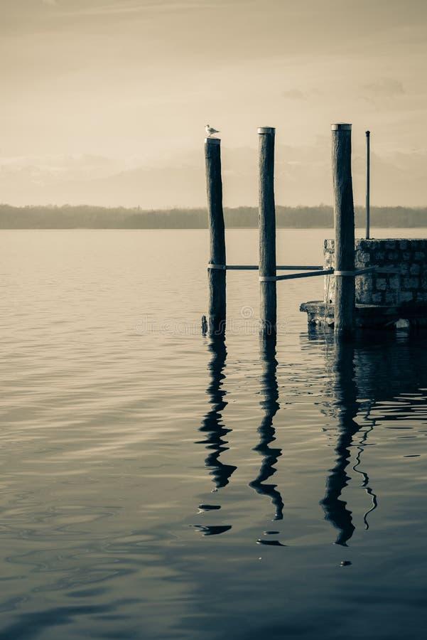 Состыкуйте штабелевки в озере с чайкой, романтичной сценой, b&w стоковые фото