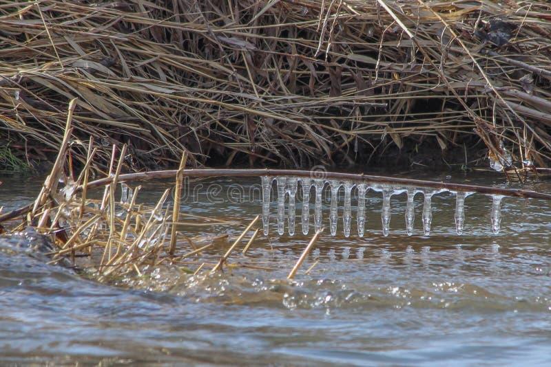 Сосульки реки Голландии стоковые изображения rf