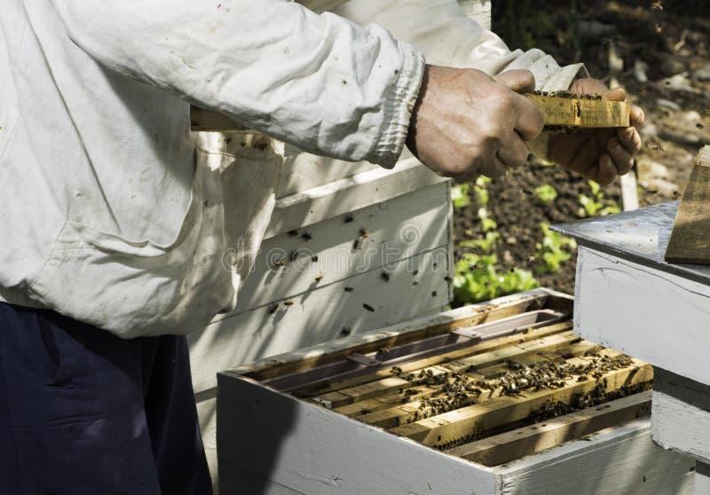 Соты взгляда Beekeeper стоковое изображение rf