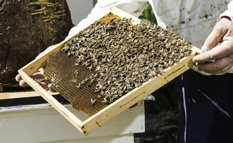 Соты взгляда Beekeeper стоковое фото rf
