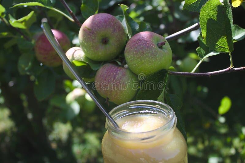 Соус Яблока на яблоне стоковые изображения
