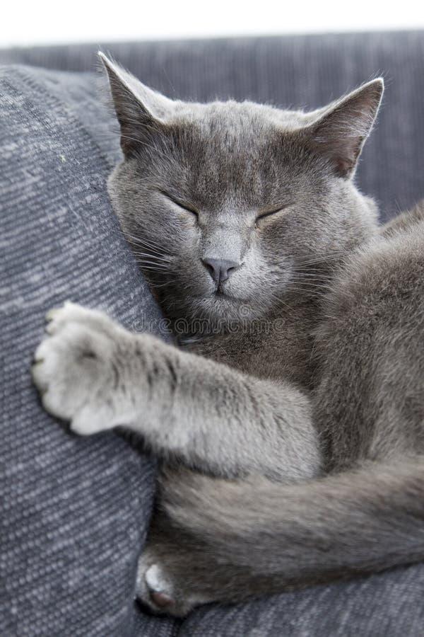 софа серого цвета кота стоковое фото