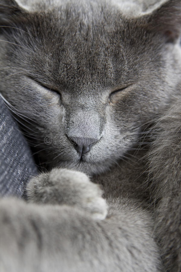 софа серого цвета кота стоковые фото