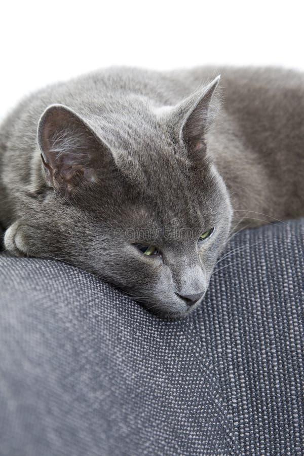 софа спать кота серая стоковые изображения rf