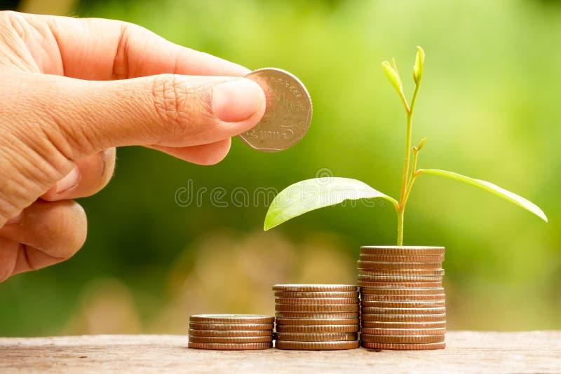 Сохраните деньги для завода концепции вклада растя из монеток стоковая фотография rf