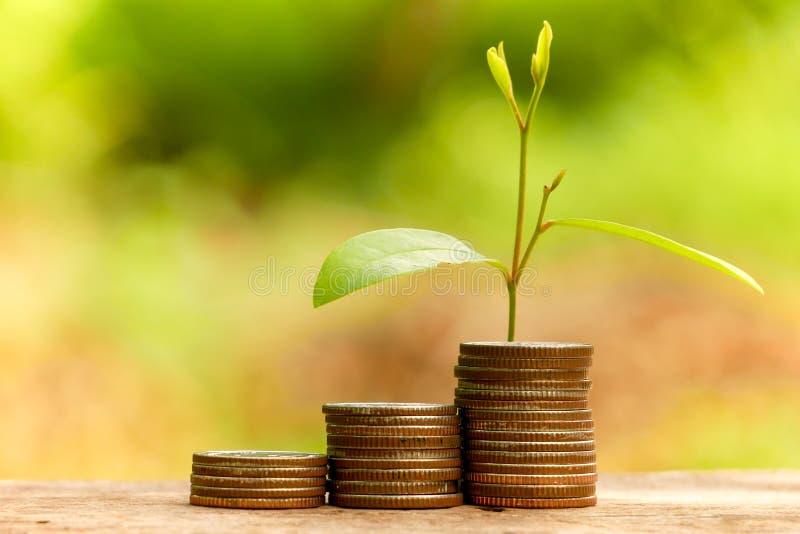 Сохраните деньги для завода концепции вклада растя из монеток стоковые изображения