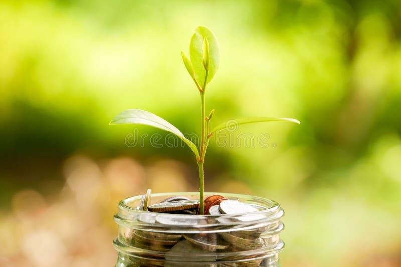Сохраните деньги для концепции вклада завод растя из монеток стоковое изображение rf