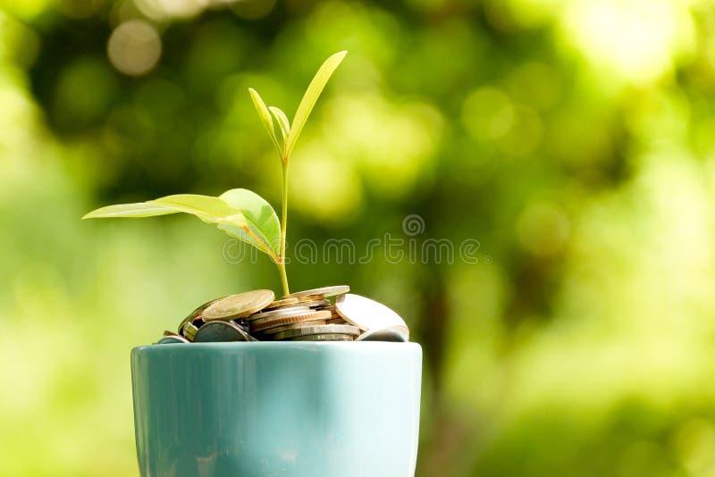 Сохраните деньги для концепции вклада завод растя из монеток стоковые изображения