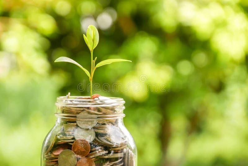 Сохраните деньги для концепции вклада завод растя из монеток стоковое фото rf