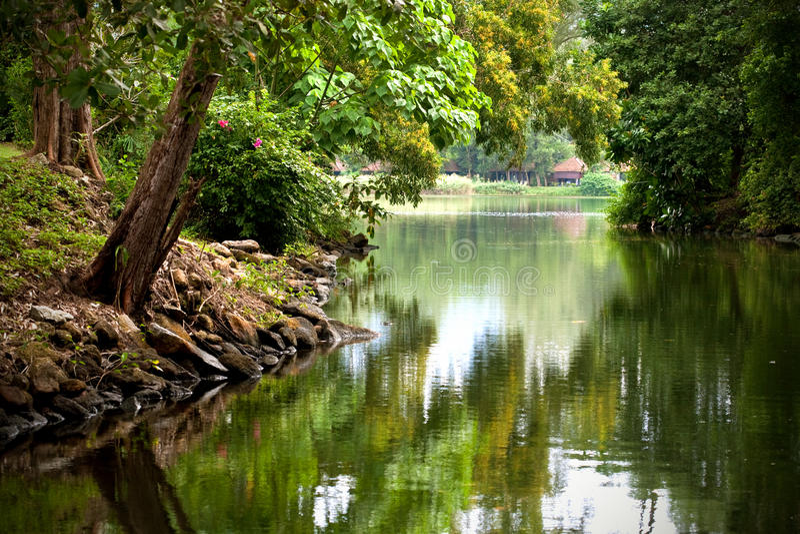 Сочная зеленая пуща окружая реку стоковая фотография