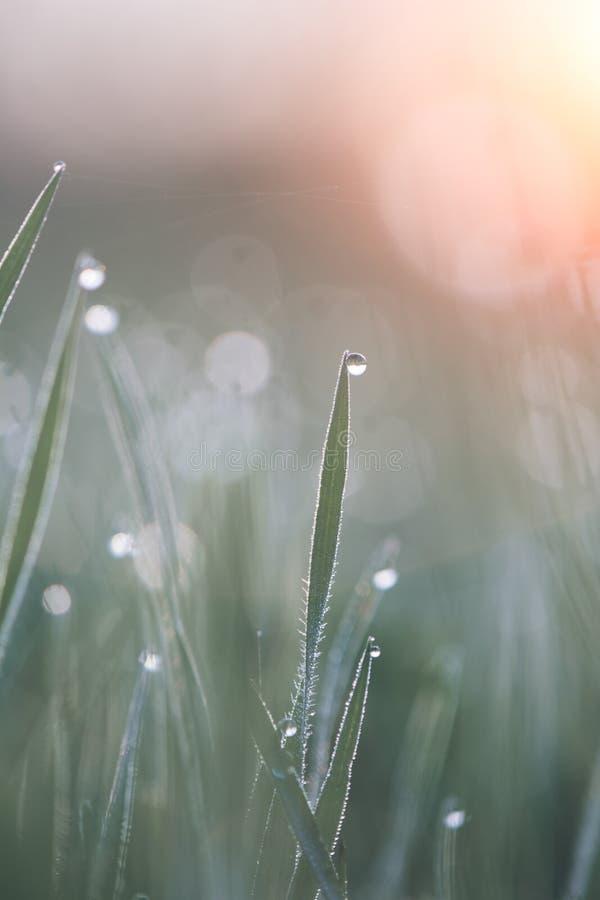 Download Сочная зеленая трава с росой Стоковое Фото - изображение насчитывающей красивейшее, естественно: 40582554