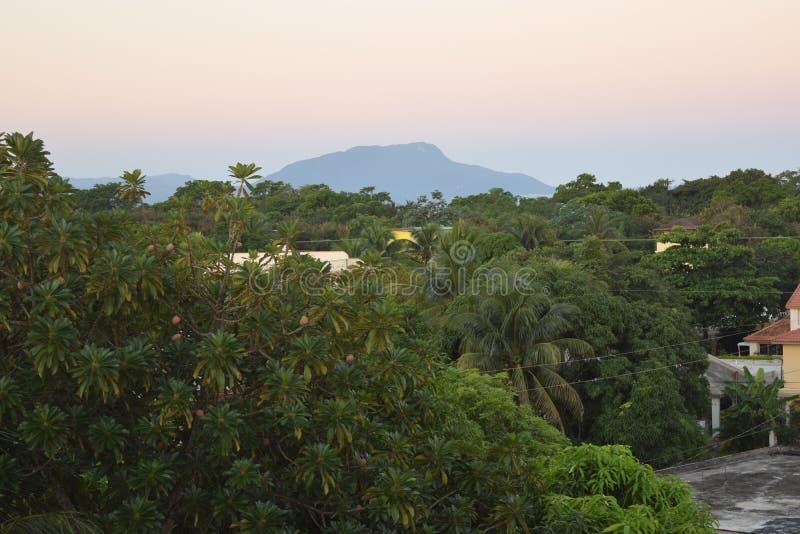 Сочная карибская сцена стоковое фото rf