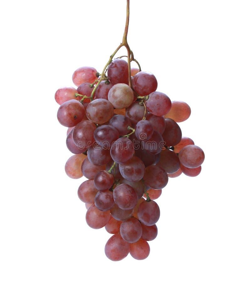Сочная красная виноградина 2 стоковые фото