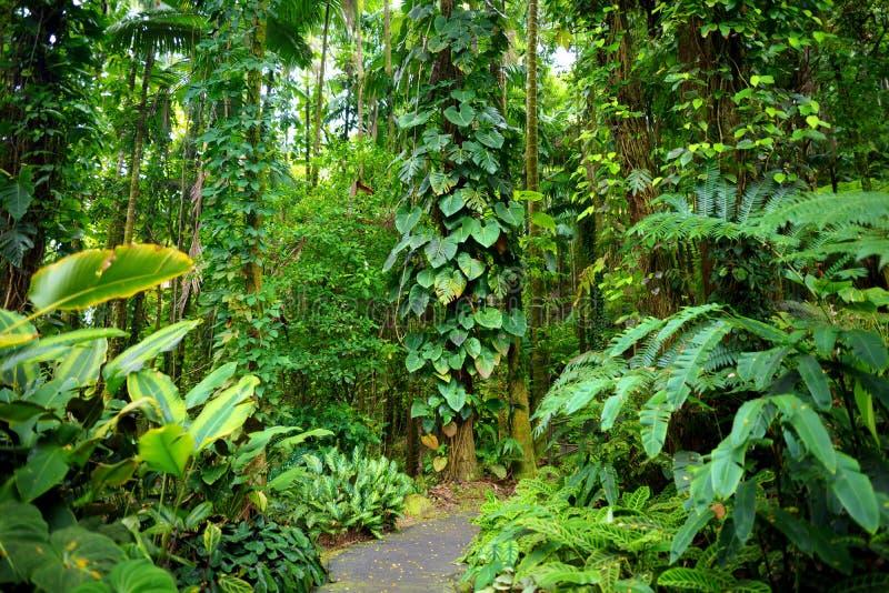 Сочная тропическая вегетация сада Гаваи тропического ботанического большого острова Гаваи стоковая фотография rf