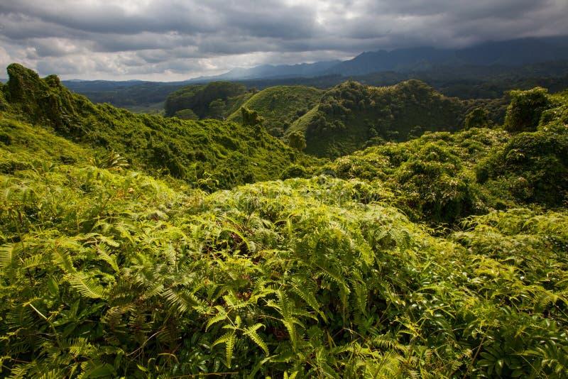 Сочная тропическая пуща, облака шторма стоковые изображения
