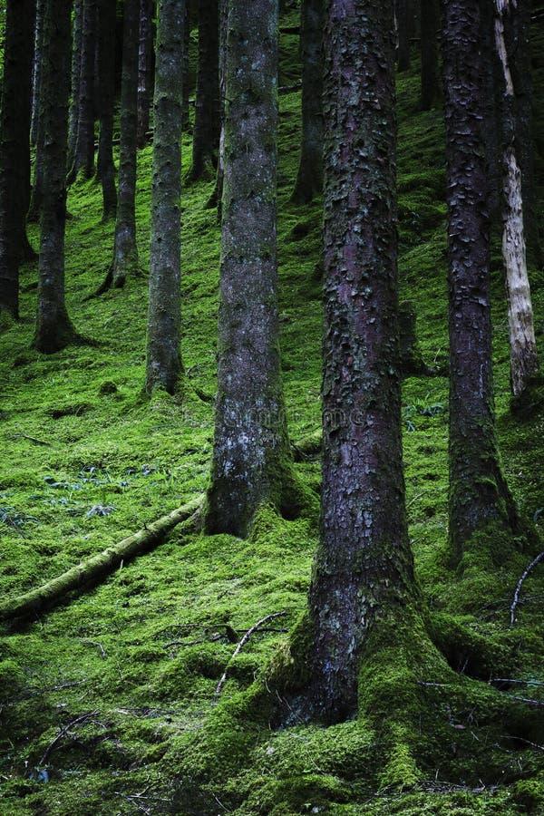 Сочная шотландская сцена полесья стоковое фото